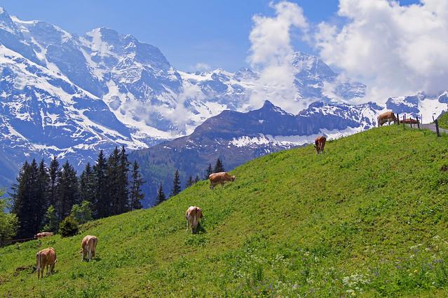 glorious Switzerland