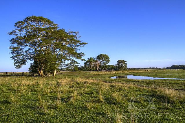 Pantanal da Nhecolândia