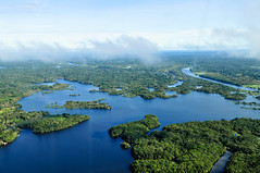 아마존 우림