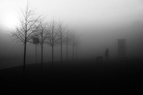 street mist fog alley silhouettes trees morning sunrise blackandwhite monochrome fujifilm xe2 xc50230