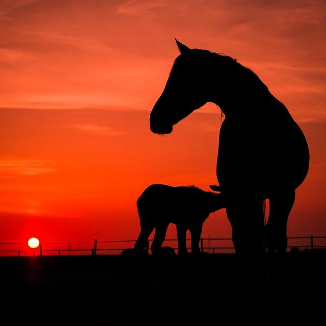 Brinda's Horses - 3 a