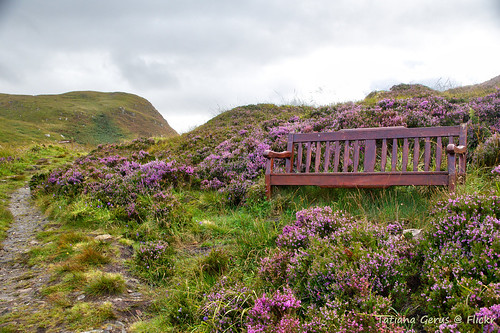 Take a sit among the heather bush | by Tatters ✾