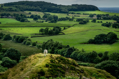 wood summer sheep landscape alone sony lamb woodland watching wildlife