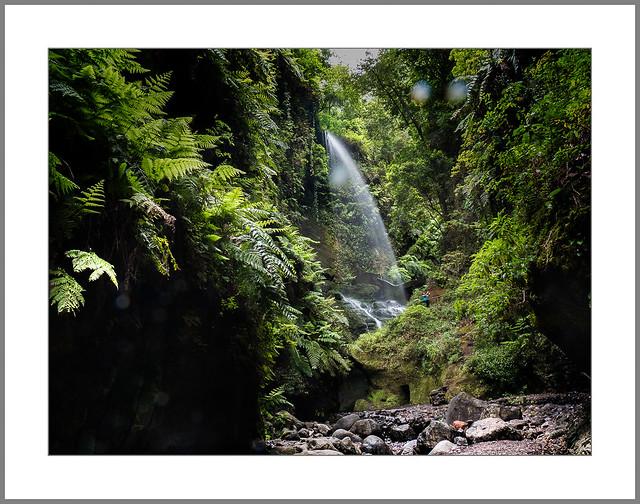 Im Lorbeerwald (In the laurel forest)