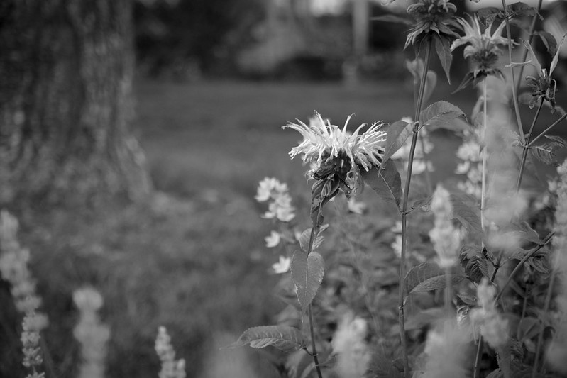 floral forms, tree trunk, lawn, neighborhood, West Asheville, NC, Nikon D3300, Sigma 18-50mm EX DC MACRO, 6.12.17