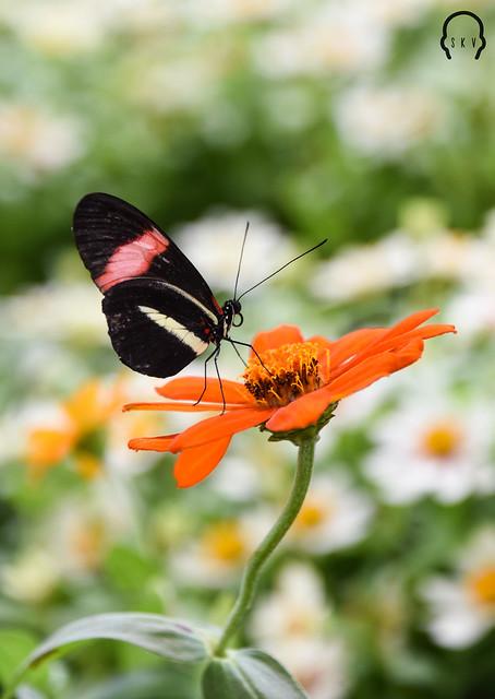 Duabai Butterfly Garden