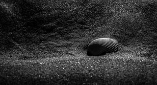 Shell | by Matthew Johnson1