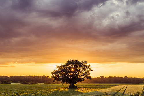 Before a Dying Sun   by Chez Eskay