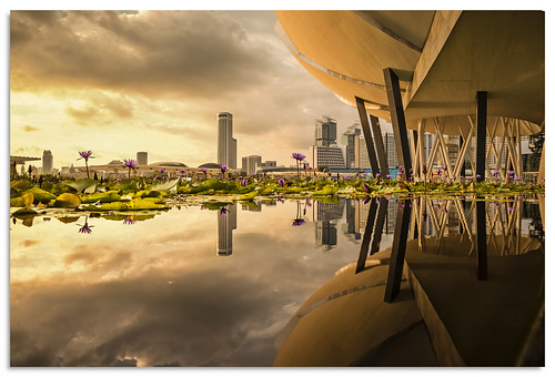 singapore artsciencemuseum reflection 2016 water lilyponds lily d600 sunset ngc nikonfxshowcase nikkor1635mmf4