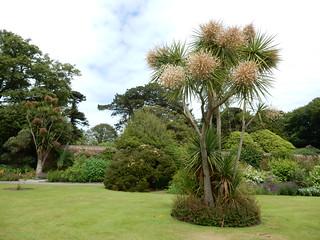 Tropical trees, Logan Botanic Garden | by Beth M527