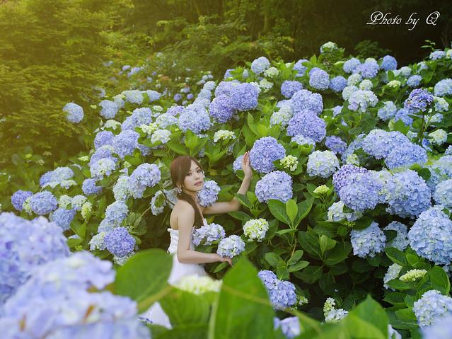 花嫁と紫陽花