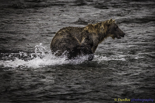 Bear starting action