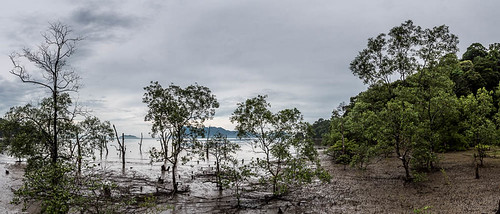 Mangrove | by Pascale Jaquet & Olivier Noaillon