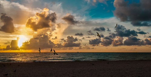 seashore seagull beach beachscape sea clouds skies miamifl miamibeach earlyinthemorning early seascape outdoors walking waterways walkingaround sunrise