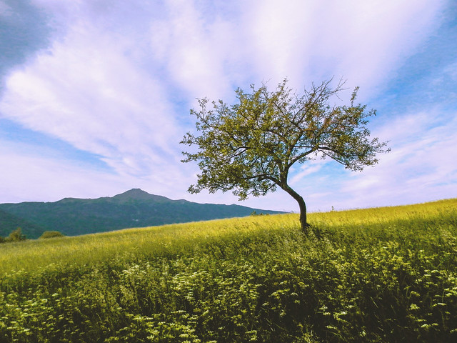 Lonely tree on a mountain field