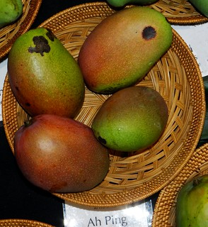 Mango  #385: AH PING