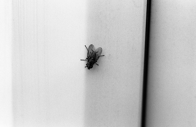 FILM - The fly