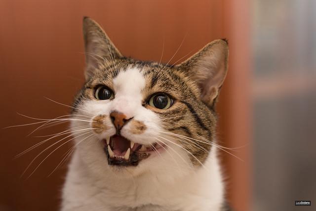 Ehi cat, smile!