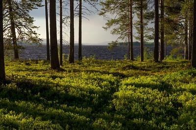 Finnish Language Test Course