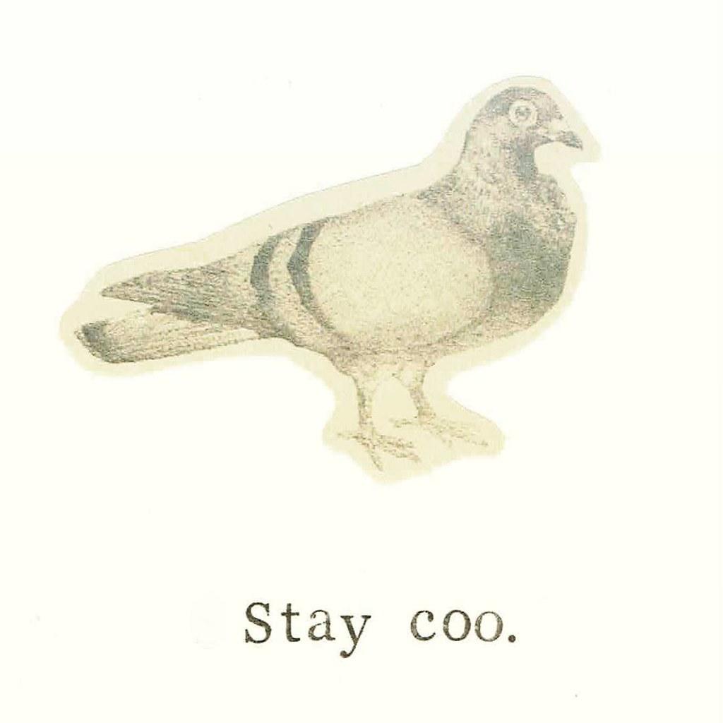 Grey poop on  #etsy #pigeon #birds #puns | bluespecsstudio|etsy | Flickr