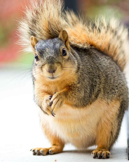 Squirrel crouching