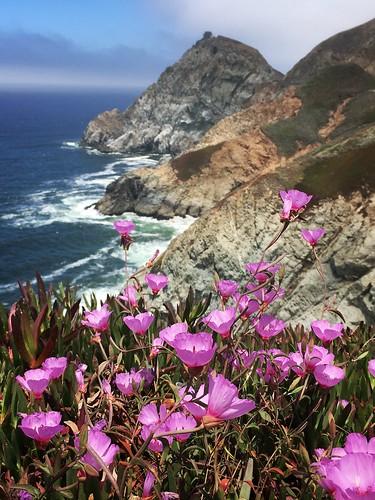 graywhalecovestatebeach california montara