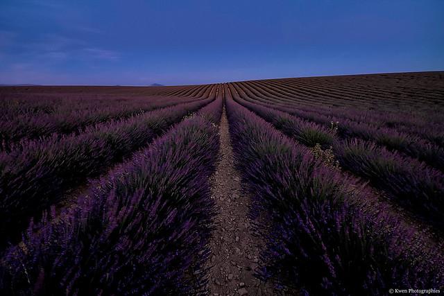France-Alpes de Haute Provence-Sunset Valensole et sa lavande-4