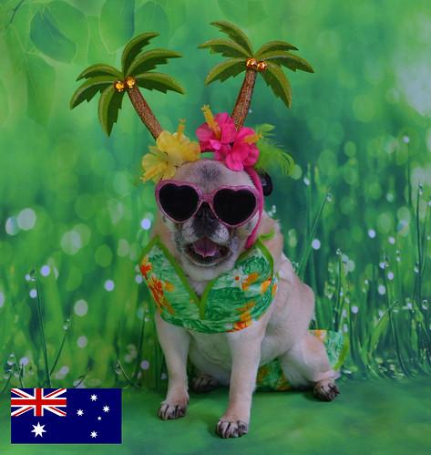 Bailey Puggins Visits Australia | by DaPuglet