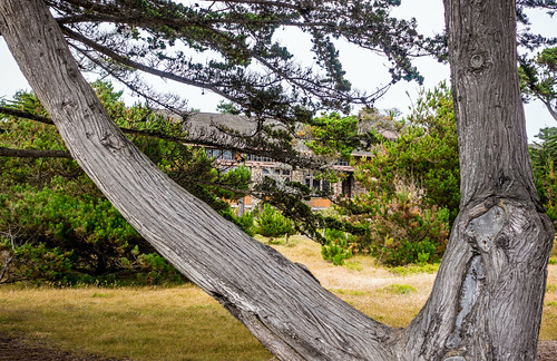 recreational california beach historic asilomarconferencegrounds pacificocean outdoor park ca nature pacificgrove unitedstates us