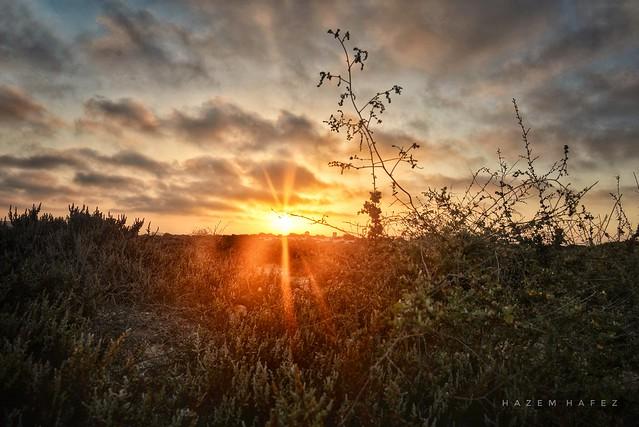 Desert Sunsets ...