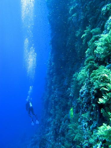 Wall dive | by Derek Keats