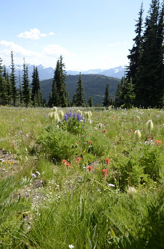 Manning Park wildflowers 2 | by Pierre Yeremian