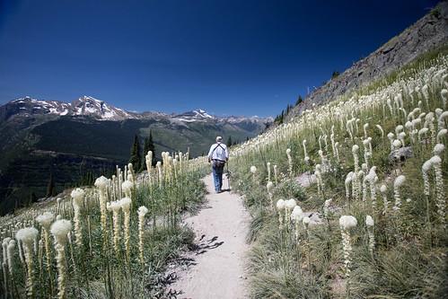 glaciernationalpark gnp highlinetrail beargrass hiker trail