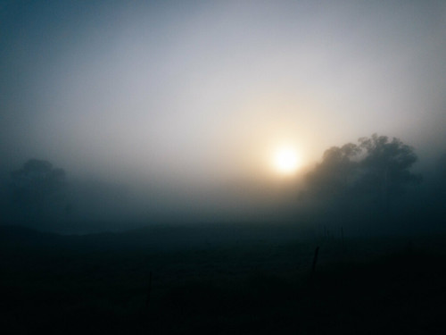 appleiphone7 australia fog newsouthwales schofields sunrise sydney landscape tree
