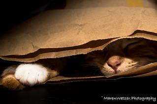 Spleeping Bag | by Michelmädchen