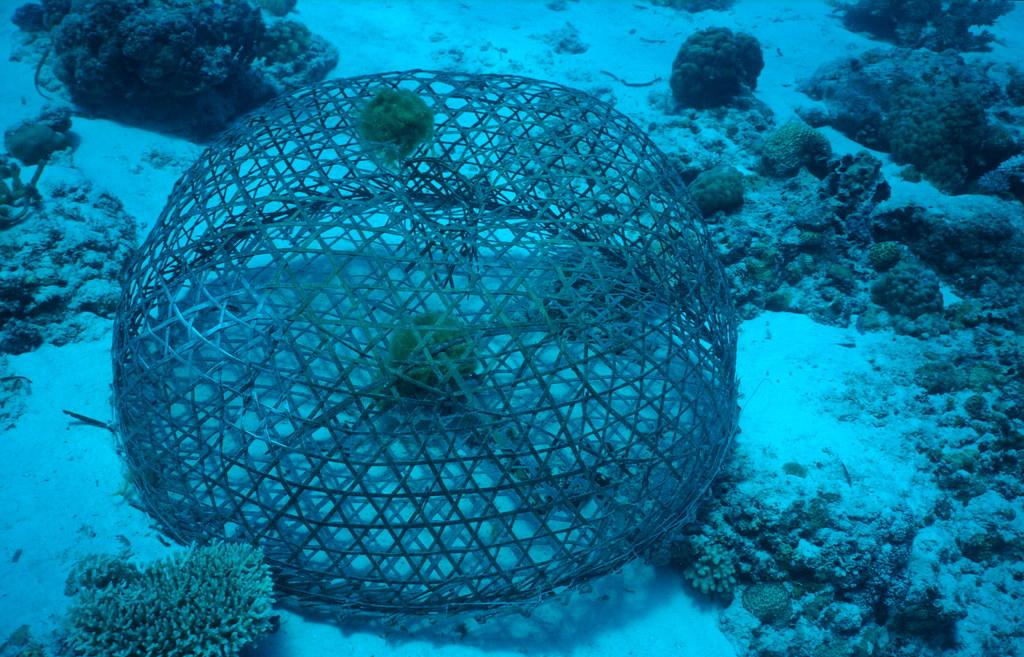 Fish trap, philippines