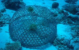 Fish trap, philippines | by Derek Keats