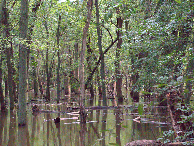 Fox River flood plain 03-20170724