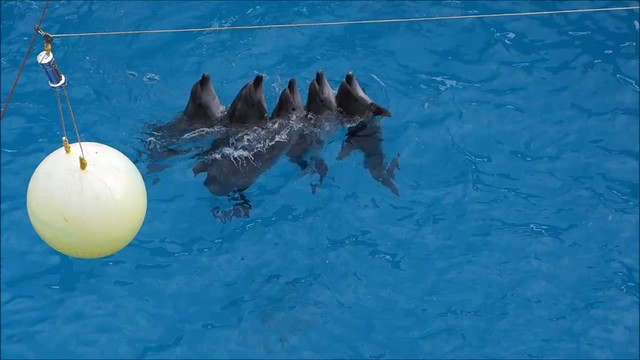 Dancing Dolphins at Nemo Hotel