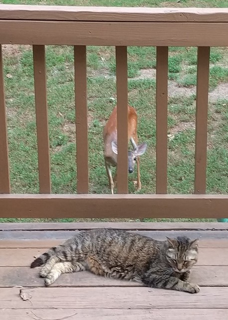 Boomer and a Deer