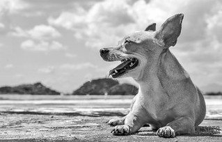 Chihuahua Returns