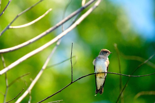 Fly Catcher at rest | by Jamie McCaffrey