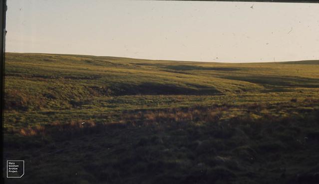 Molinia / nardus recovers after burning. Rhondda Fach. June 1972