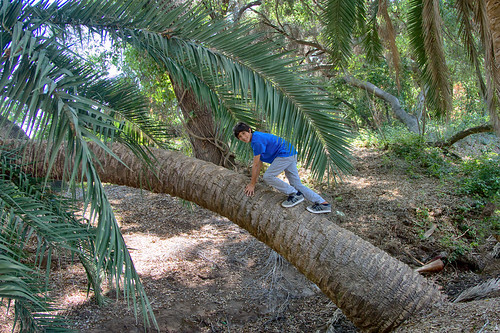 mowgli india nature jungle tale book animal asia palmtree palmae park scenery grove forest landscape indian palm woodland natural alone boy child climb tree fun play action