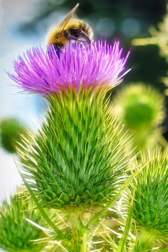 Bee Bomb-HMM!   Macro Mondays-Texture I love these gorgeous …   Flickr