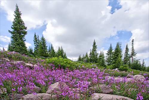 forest woods trees flowers wildflowers brianhead utah wilderness nature landscape sky clouds