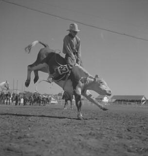 Cowboy No. 62 competes, Calgary Stampede, Alberta / Cowboy no 62 en pleine compétition, Stampede de Calgary (Alberta)