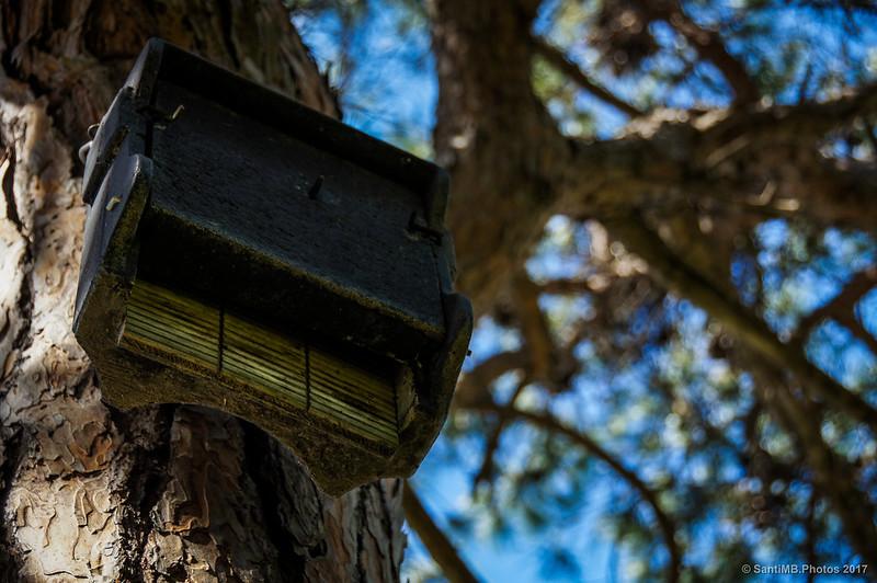 El nido de los murciélagos