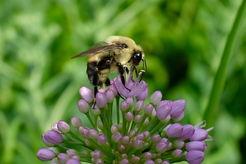 Bee | by pburka