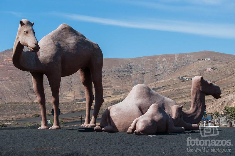Homenaje al Camello